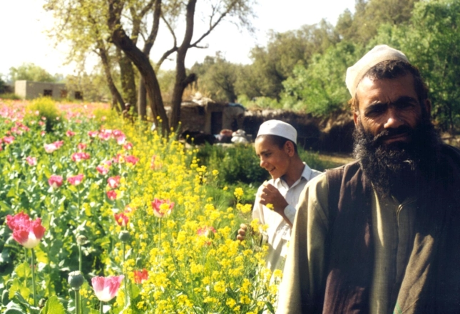 Eradicating the opium business is quite a challenge for the Afghan government. Date: 2002